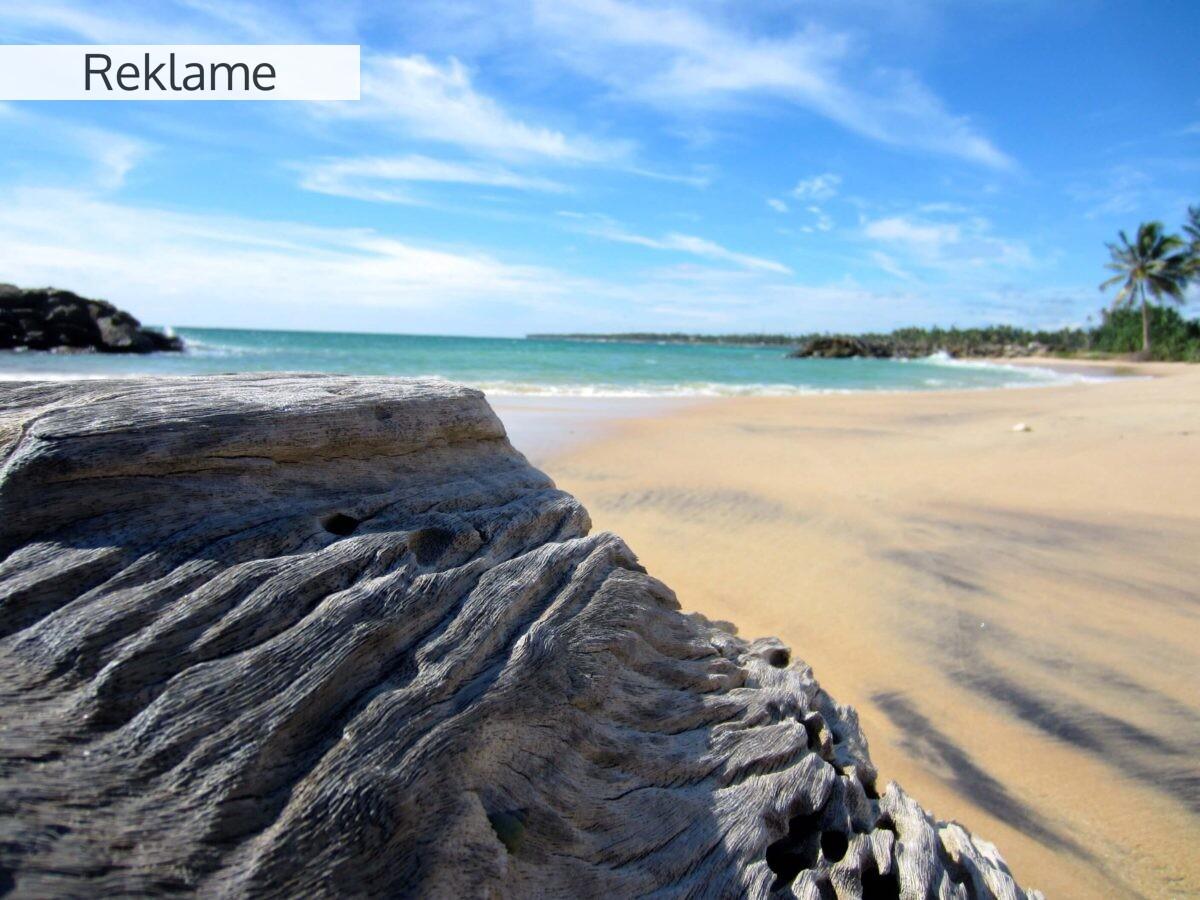 Derfor skal du rejse til Sri Lanka – Asiens grønne juvel